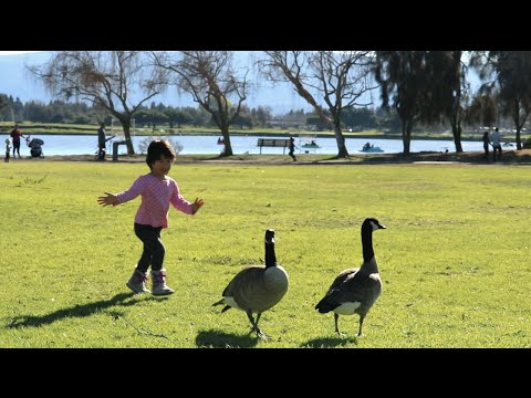 Winter day at Shoreline Park, Mountain View, CA