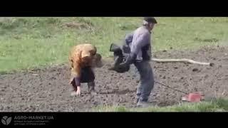 ЛУЧШИЕ ПРИКОЛЫ 2018 Февраль | Подборка приколов #1 до слез | Дед, который танцует | Agro-Market.ua