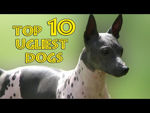 TOP TEN UGLIEST DOGS - All About Dogs