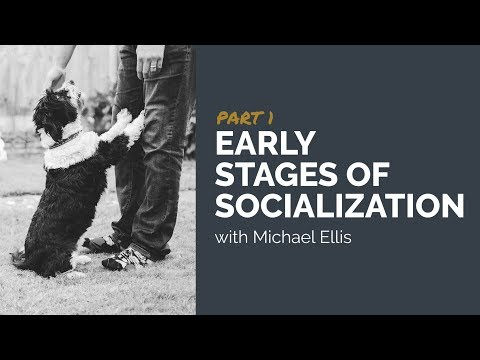 Part 1 - Early Stages of Socialization with Michael Ellis