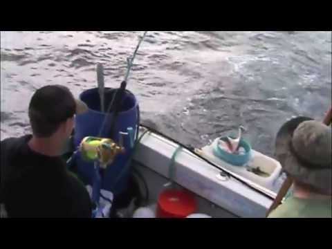 1,098lb. California state record mako catch video