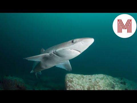 5 самых опасных обитателей Чёрного моря