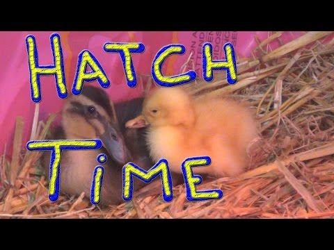Ducks Left Me… #89 Ducks For The Homeless