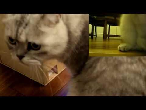 IoT Treat Dispenser for Pets