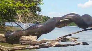 Khám Phá 10 Điều Từ Lâu Ẩn Náu Trong Rừng Rậm Amazon - Chuyện Lạ Kỳ Thú