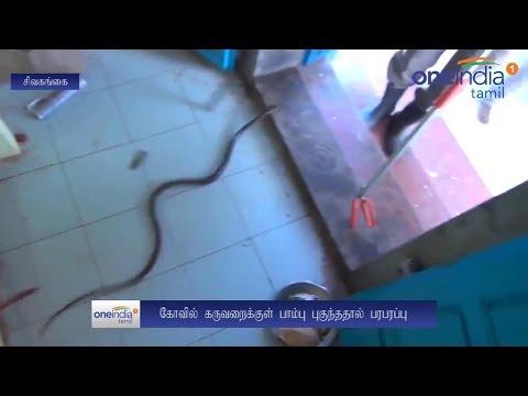 Snake found in Karaikudi temple of Tamil Nadu, Watch Video | Oneindia News