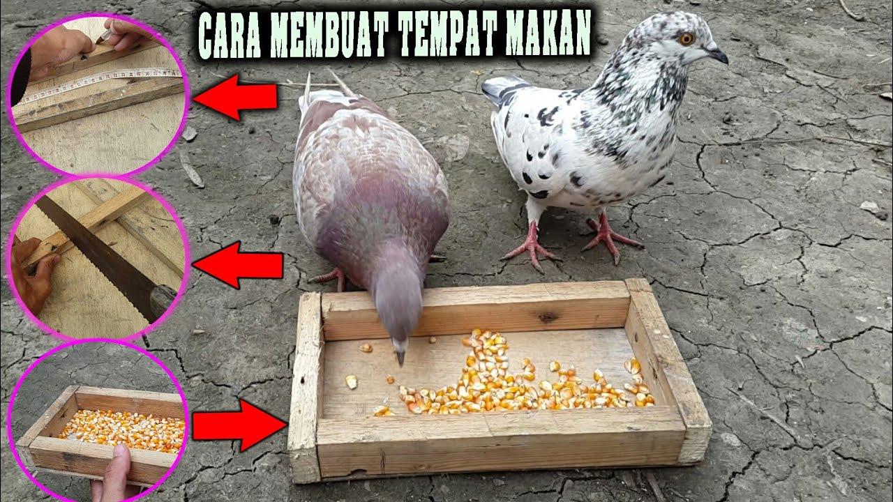 Cara Membuat Tempat Makan Burung Merpati Tempatmakanmerpati Youtube