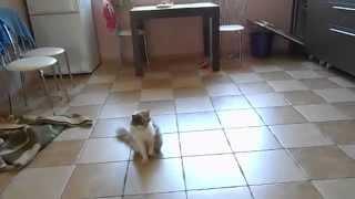дети кошка и любимая жена - вот это моя семья 21-23 .07.15г