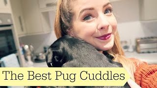 The Best Pug Cuddles | Ad