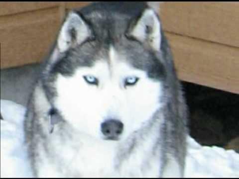 Gut gemocht Kanouk notre loup blanc - YouTube SH59