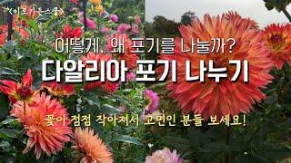 [꽃이야기] 다알리아 포기 나누기_생장점을 살려서 괴근…