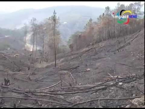 Impact Green Campaign Manipur: Destruction caused by man on nature