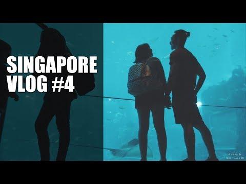 Sentosa - Điều bất ngờ ở S.E.A Aquarium | Singapore Vlog #4