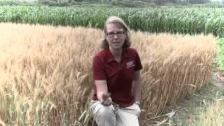 Cornell Soil Health Assessment in Ontario