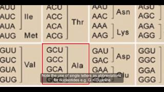 DAT: Gene Expression - Translation -  Introduction to the Genetic Code