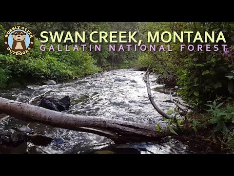 Medicine Mt., Wyoming & Swan Creek In Montana, Gallatin National Forest