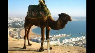 Опа опа Америка Европа На горе стоял верблюд 18