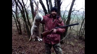 Охота на зайца осенью с подхода