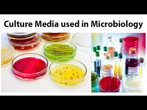 Mnemonics for Culture media selective media for various imp bacteria in microbiology
