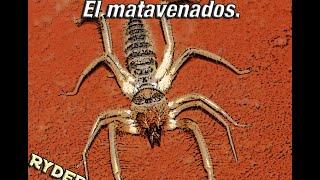 Maratón de insectos: El insecto matavenados.