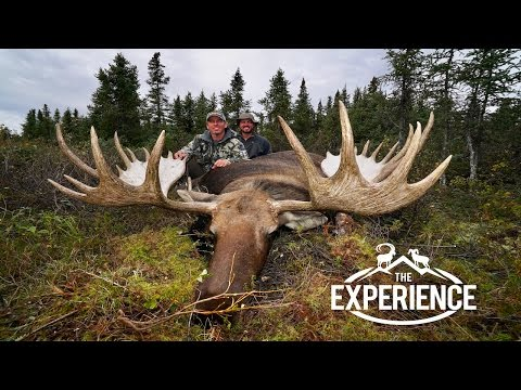 GIANT ALASKAN YUKON MOOSE -Grand Slam Club Ovis North American Big Game
