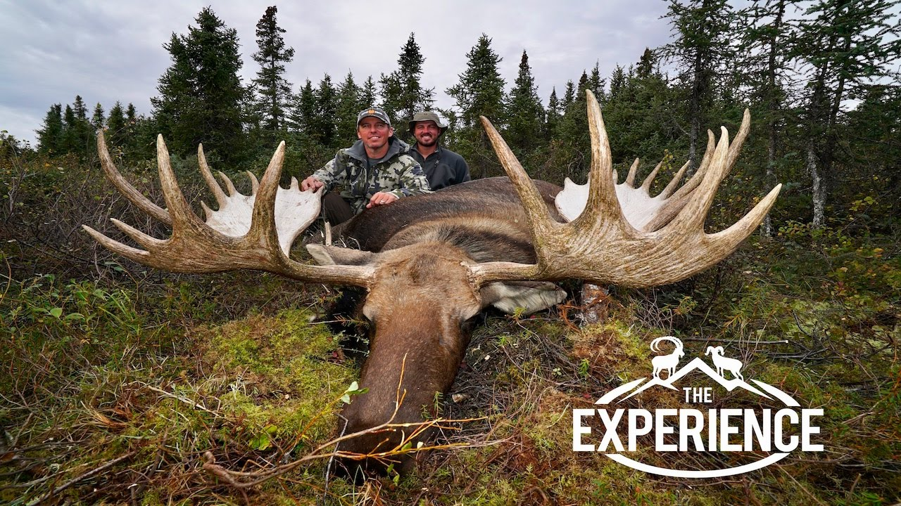 Giant alaskan yukon moose youtube giant alaskan yukon moose solutioingenieria Gallery