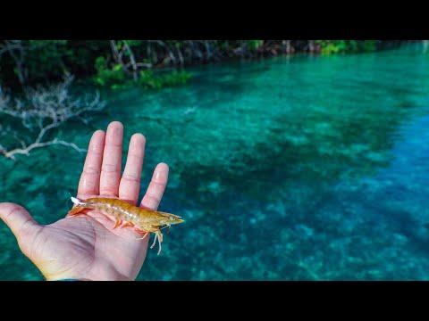 Fishing Jumbo Live Shrimp In Beautiful Blue Water + An Unbelievable Catch