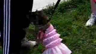 Crazy Pet Tricks - Border Terrier Dog Pirouette