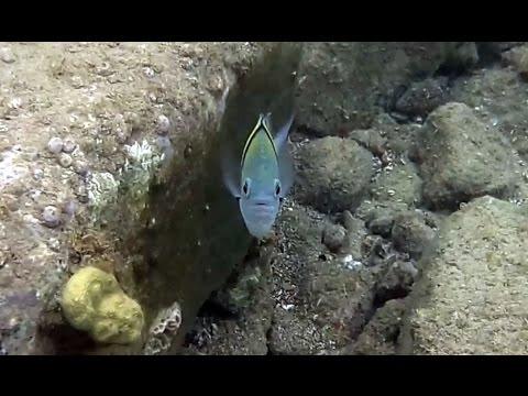 CHANTS des BALEINES et petits poissons.