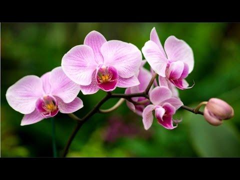 Curso Cultivo de Orquídeas para Fins Comerciais ou Hobby - Doenças e Pragas