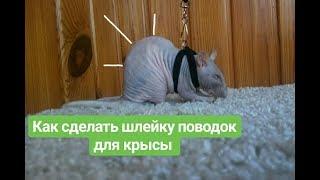 как сделать поводок для крысы