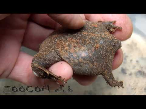 Самая странная лягушка делает самые странные вещи!