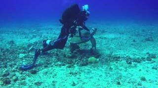 Navy Tug Mistake Reef April 2016
