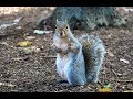 Squirrels In Storage Shed Work Shop