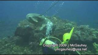 Monk Seal Encounter/Attack