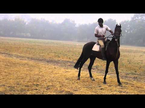 SHREE R D JHALA HORSE RIDING CLUB RAJKOT GUJARAT INDIA     Rdjhalahorseridingclub blogspot in 116