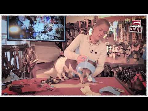 Das richtige Hunde-Geschirr? Vest Airmesh Curli Westengeschirr, Test by Dogstyler