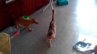 Нассал собаке в миску