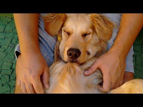 Canine Massage    ViralHog