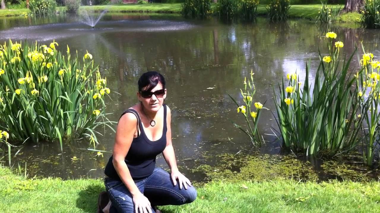 The Koi Whisperer Sanctuary S Spring Fed Pond