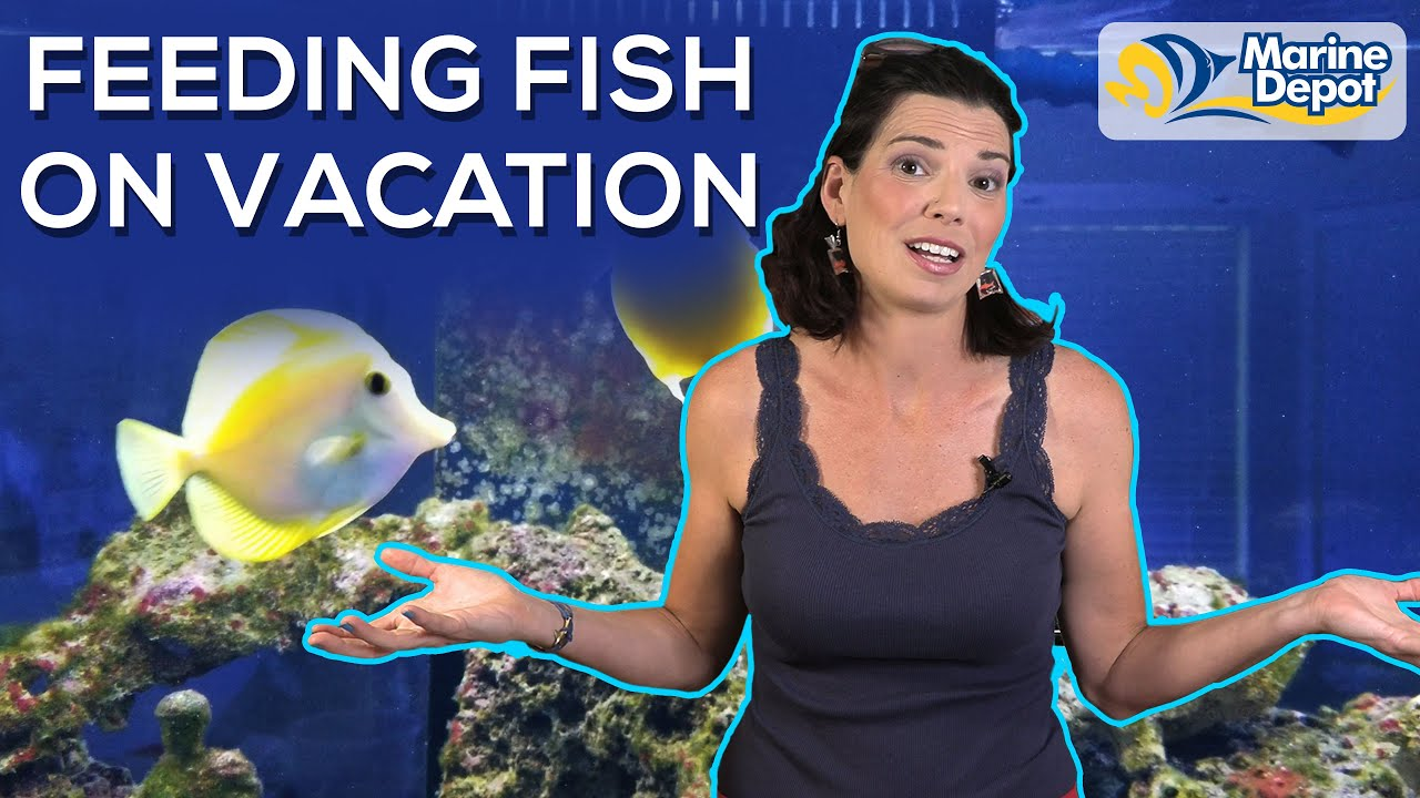 Feeding Your Fish While on Vacation | Preparation and Auto-Feeders with Hilary from WaterLogged