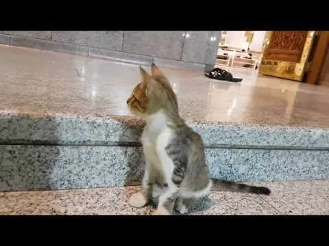 cat at  prophet Mohammed mosque _