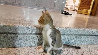 سبحان الله قط في رحاب مسجد رسول الله صل الله علية وسلم  cat at  prophet Mohammed mosque _