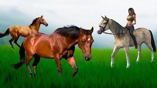Первое одомашнивание лошади. Ботайская или ямная культура? Новые загадки праиндоевропейского языка.