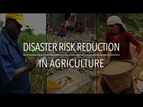 FAO Policy Series: Disaster Risk Reduction in Agriculture