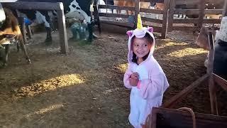 Na roça com vovô tirando leitinho da vaca