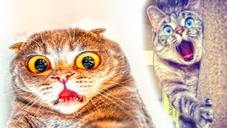Scared cats compilation Part 1 - Funny cat Videos - Try Not To Laugh