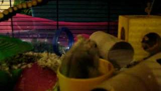 Poppet in his new cage :)