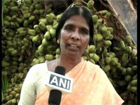 Coconut trees bear record breaking 5000 fruits in India