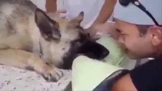 Самое грустное видео. (прощание с собакой)